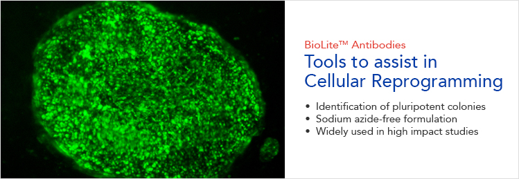 BioLite Antibodies for Cell Reprogramming