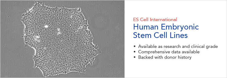 ES cell international cell lines