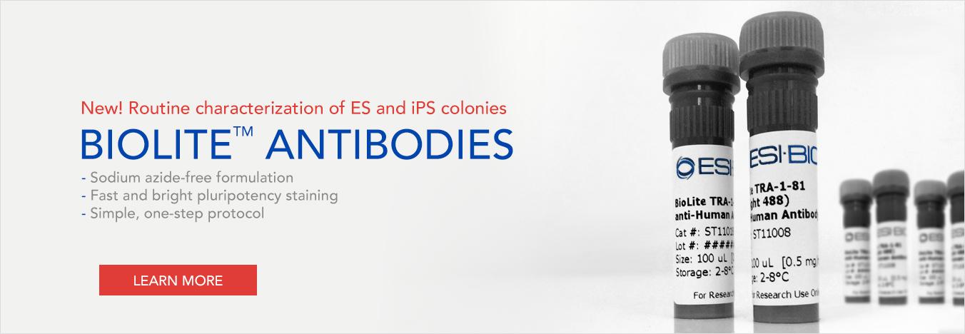 New BioLite Antibodies